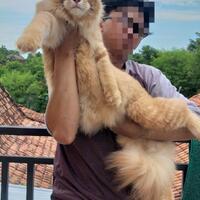 4-ras-kucing-dengan-genetik-aneh-tapi-menarik