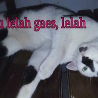 kucing-kesayangan-penghilang-stress-dan-pelipur-kesedihanku