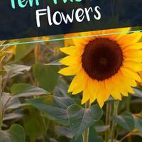 orific-ten-thousand-flowers