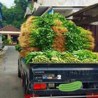 lagi-viral-pedagang-buang-sayuran-ke-sungai