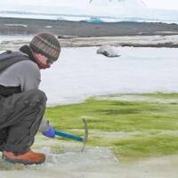 waduh-antartika-sedang-berubah-menjadi-hijau-tanda-tanda-kiamat-kah