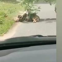 debat-netizen-62-melihat-rusa-dimangsa-ular-rantai-makanan-atau-rasa-kemanusiaan