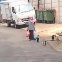 kenapa-ibu-ini-selalu-diikuti-banyak-kucing-liar-alasannya-bikin-terharu