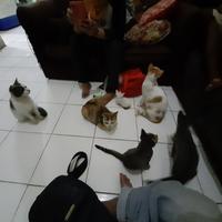 tips-merawat-kucing-baru-datang-pengalaman-pribadi