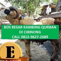 call-0812-9627-2689-tempat-penjualan-kambing-qurban-di-depok
