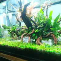 hobby-aquascape-3-jenis-gaya-pada-aquascape