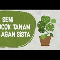 mau-membudidayakan-tanaman-bunga-adenium-nggak-susah-kok-mampir-dimari-gan