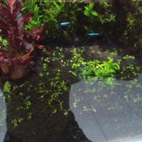 aquascape-for-everyone-learning-and-sharing---part-4