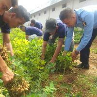 program-lapas-kelas-iia-banyuasin-akhirnya-panen-20-kg-kacang-tanah