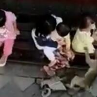 penculikan-oleh-monyet-di-indonesia