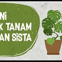 cara-indah-nanem-bonsai-beringin-biasa-disebut-sekijoru-atau-on-the-rock