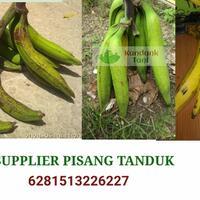 supplier-pisang-tanduk-sukabumi