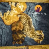 hayukkk-gansis-yang-punya-pets-ikutan-community-challenge-forum-pets