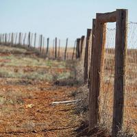 dingo-fence-pagar-terpanjang-di-dunia-panjangnya-4-kali-pulau-jawa-loh