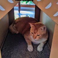community-challenge-edisi-pets-part-2-ikutan-lagi-dong