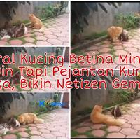 viral-video-kucing-betina-minta-kimpoi-tapi-pejantan-kurang-peka-netizen-gemas