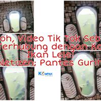 heboh-video-tiktok-sebuah-wc-terhubung-dengan-kolam-ikan-lele-netizen-pantes-gurih