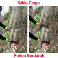 geger-pohon-dibacok-dan-keluar-darah-netizen-spekulasi-ada-orang-mati-di-dalamnya