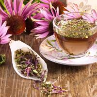 manfaat-echinacea-dari-menyembuhkan-pilek-sampai-turunkan-gula-darah