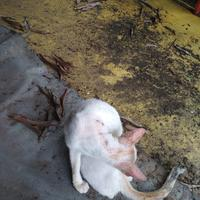 coc-pets-cara-ane-merawat-kucing-kampung-layaknya-kucing-ras-aslinyalo