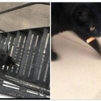 ngakak-kucing-ini-curi-rokok-milik-tetangga-untuk-majikannya