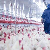 5-fakta-h5n8-varian-terbaru-flu-burung-yang-mulai-tulari-manusia