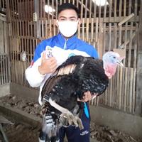 mau-sukses-di-masa-pandemi-ternak-ayam-kalkun-bisa-jadi-pilihannya-gan