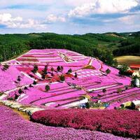 cari-tempat-romantis-untuk-prewedding-taman-seribu-bunga-di-brastagilah-tempatnya