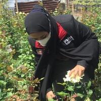 mahasiswa-pmm-umm-bantu-kegiatan-petani-dalam-pengelolaan-dan-memanen-bunga-mawar