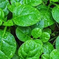manfaat-tumbuhan-di-sekitar-rumah