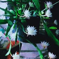 aroma-mistis-menguar-mitos-dari-indahnya-penampakan-bunga-bunga-ini