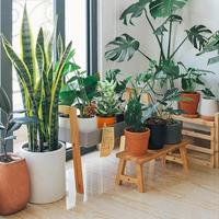 7-cara-merawat-tanaman-hias-agar-tumbuh-subur-dan-tidak-layu