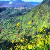 nikmati-juga-pesona-bukit-kembang-desa-sapih-saat-melancong-ke-gunung-bromo