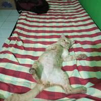 mitos-kucing-oren-9-fakta-ilmiah-dari-si-kucing-oren