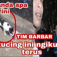viral-terbaru-kucing-siluman-mengikutin-tim-barbar