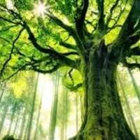 kombat-horor-mengapa-pohon-itu-dipaku---real-story