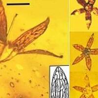 meski-terlihat-baru-dipetik-7-spesimen-bunga-ini-telah-berumur-100-juta-tahun