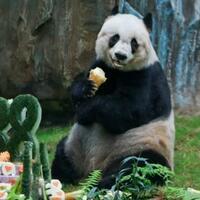 lucu-imut--menggemaskan-siapakah-aku--sebut-saja-namaku-panda