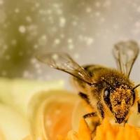 6-fakta-luar-biasa-lebah-yang-wajib-kita-ketahui