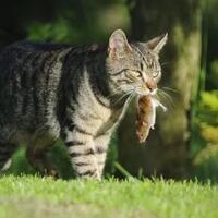 meski-sudah-dilepas-namun-tetap-kembali-dimana-sebenarnya-habitat-kucing-rumah
