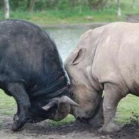 4-binatang-yang-mempunyai-andil-dalam-sebuah-peperangan