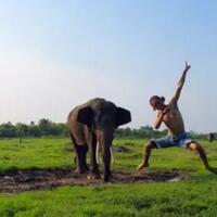 lucunya-gajah-gajah-di-taman-nasional-way-kambas