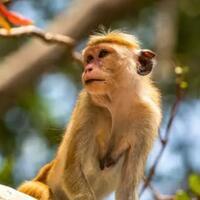 monyet-ini-lucu-manusia-tertarik-merangkulnya