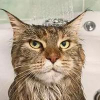 kucing-agan-botak-baca-7-penyebab-bulu-kucing-botak