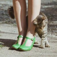 kode-keras-sang-kucing-yang-perlu-dipahami