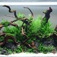 hobby-aquascape-3-jenis-gaya-pada-aquascape
