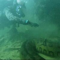 serem-demi-740-juta-pria-ini-nekad-selami-sungai-amazon-untuk-menemui-anaconda