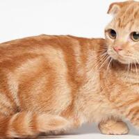 suka-kucing-yuk-intip-5-jenis-kucing-yang-lucu-dan-menggemaskan-versi-ane