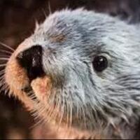 otter-hewan-peliharaan-yang-populer-di-zaman-now