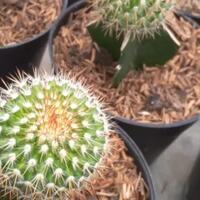 wow-ternyata-kaktus-ini-punya-nama-unik-lho